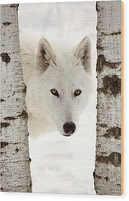 Arctic Wolf Seen Between Two Trees In Winter Wood Print by Mark Duffy