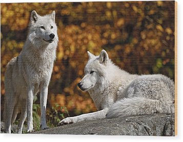 Wood Print featuring the photograph Arctic Wolves On Rocks by Michael Cummings