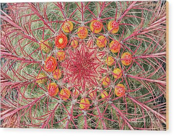 Arizona Barrel Cactus Wood Print by Delphimages Photo Creations