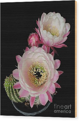 Arizona Desert Cactus Flowers Wood Print