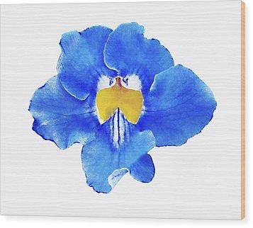 Art Blue Beauty Wood Print