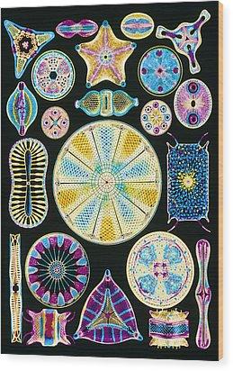 Art Of Diatom Algae (from Ernst Haeckel) Wood Print by Mehau Kulyk