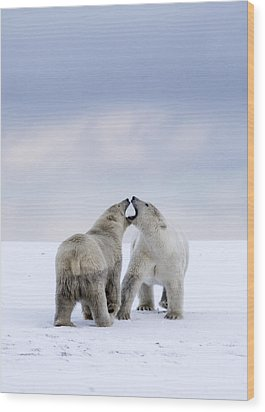 Artic Antics Wood Print