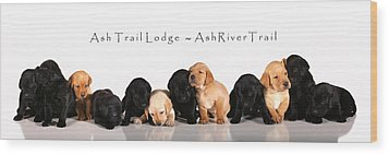 Ash Trail Lodge Pups Wood Print by Pam Gabriel