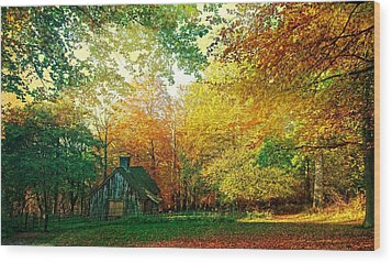 Ashridge Autumn Wood Print by Anne Kotan