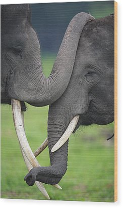 Asian Elephant Greeting Wood Print by Cyril Ruoso