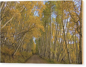 Wood Print featuring the photograph Aspen Alley by Steve Stuller