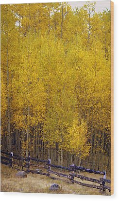 Aspen Fall 2 Wood Print by Marty Koch
