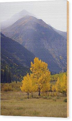 Aspen Fall 4 Wood Print by Marty Koch