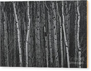Aspen Forest Wood Print by Brad Allen Fine Art