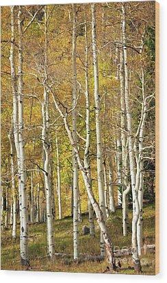 Aspen Forest Wood Print