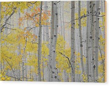 Aspen Forest Texture Wood Print