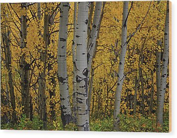 Aspen Golden Wood Print