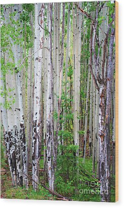 Wood Print featuring the photograph Aspen Grove In The White Mountains by Donna Greene