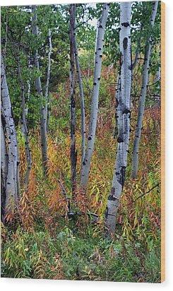 Aspen In Fall Wood Print by Marty Koch