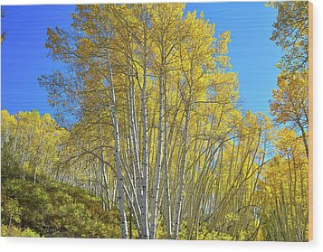 Wood Print featuring the photograph Aspen Lane by Ray Mathis