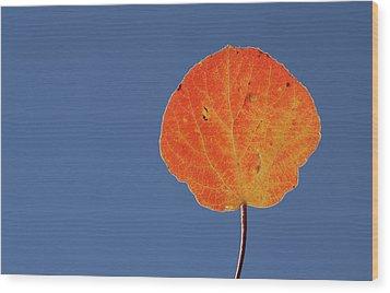 Aspen Leaf 1 Wood Print by Marie Leslie
