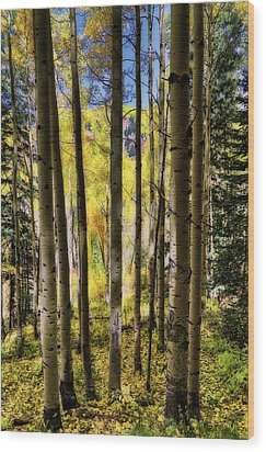 Aspen Mood - Autumn - Colorful Colorado Wood Print by Jason Politte