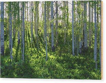 Aspen Morning 1 Wood Print by Marie Leslie