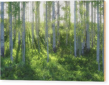 Aspen Morning 3 Wood Print by Marie Leslie