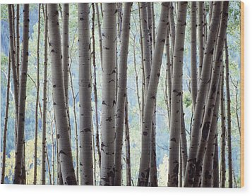 Aspen On The Edge Of Bear Creek Wood Print
