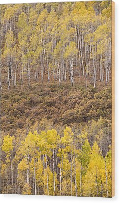 Wood Print featuring the photograph Aspen Patterns by Patricia Davidson