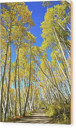 Wood Print featuring the photograph Aspen Road by Ray Mathis