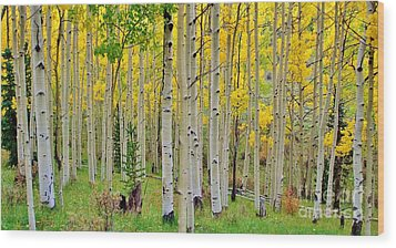 Aspen Slope Wood Print