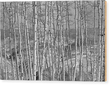 Aspen Stand In Black And White Wood Print by Kevin Munro