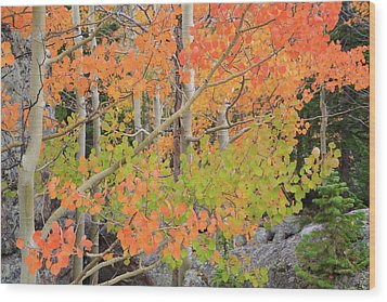 Wood Print featuring the photograph Aspen Stoplight by David Chandler