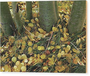 Aspen Tree Boles In Leaves Wood Print