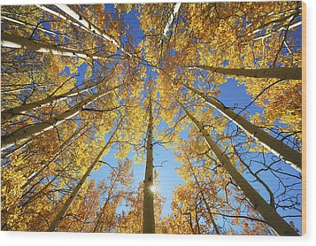 Aspen Tree Canopy 2 Wood Print by Ron Dahlquist - Printscapes