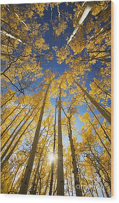 Aspen Tree Canopy 3 Wood Print by Ron Dahlquist - Printscapes
