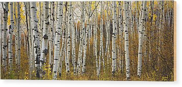 Aspen Tree Grove Wood Print by Ron Dahlquist - Printscapes