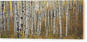 Aspen Tree Grove Wood Print