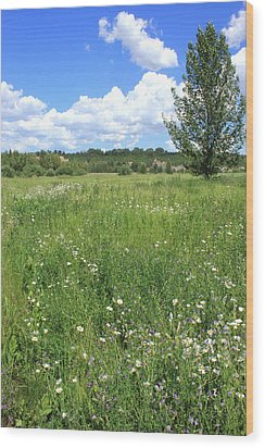 Aspen Tree In Meadow With Wild Flowers Wood Print by Jim Sauchyn