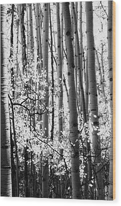 Aspen Trees Black And White Wood Print by The Forests Edge Photography - Diane Sandoval