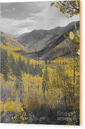 Aspen Valley In Fall Wood Print by Jeff White