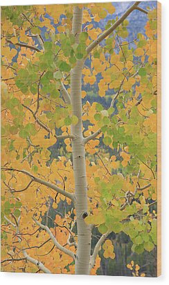 Wood Print featuring the photograph Aspen Watching You by David Chandler