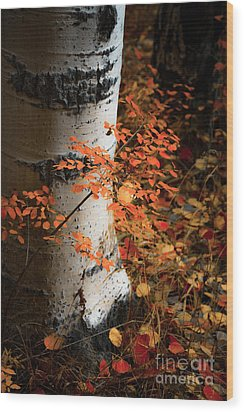 Wood Print featuring the photograph Aspen Woods by The Forests Edge Photography - Diane Sandoval