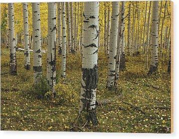 Aspens - 0245 Wood Print