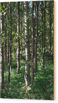 Wood Print featuring the photograph Aspens And Shadows by Marilynne Bull