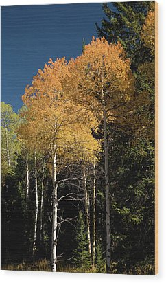 Wood Print featuring the photograph Aspens And Sky by Steve Stuller