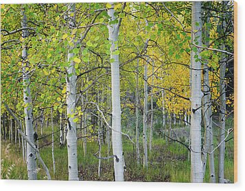 Aspens In Autumn 6 - Santa Fe National Forest New Mexico Wood Print