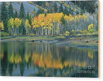 Aspens In Fall Color Along Lundy Lake Eastern Sierras California Wood Print by Dave Welling