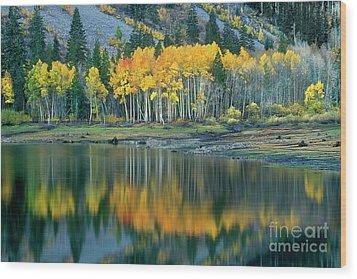 Aspens In Fall Color Along Lundy Lake Eastern Sierras California Wood Print