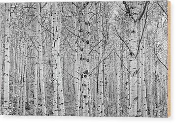 Aspens In High Key Wood Print