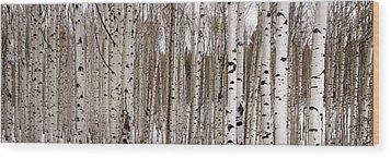 Aspens In Winter Panorama - Colorado Wood Print by Brian Harig