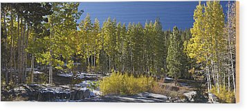Wood Print featuring the painting Aspens by Larry Darnell