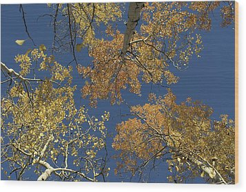 Wood Print featuring the photograph Aspens Looking Up by Mary Hone